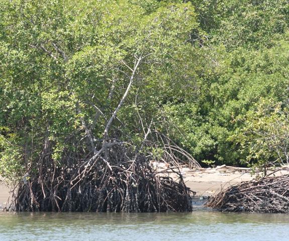 foto manglares GYE